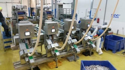 Автоматическая линия для разделки пелагических рыб